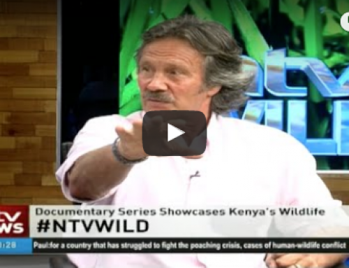 #NTVWild panel discussion: Understanding the wild in Kenya with Jonathan Scott