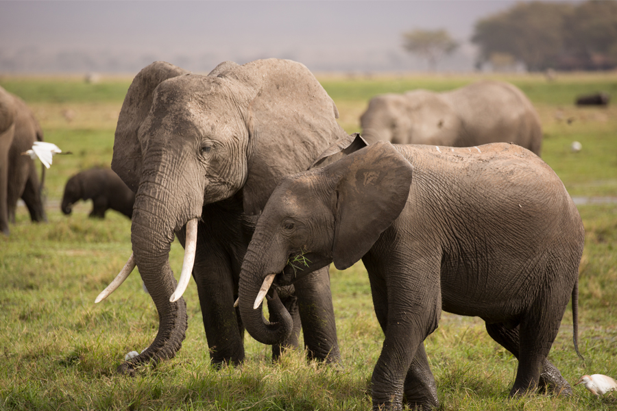 REVIEW MEETING OF THE WILDLIFE & CONSERVATION MANAGEMENT ACT PROPOSED REGULATIONS, NAIROBI
