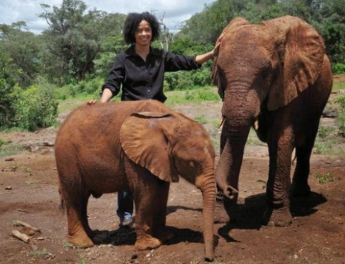 Saving Africa's Elephants Isn't Just a 'White Man's Job'