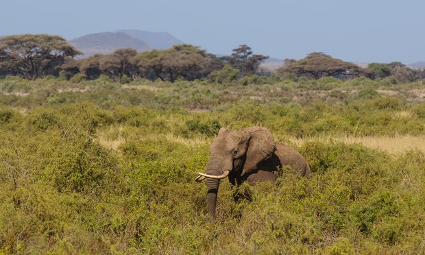 Kenyan Government Issues a 21 Day Amnesty on Ivory and Wildlife Trophies