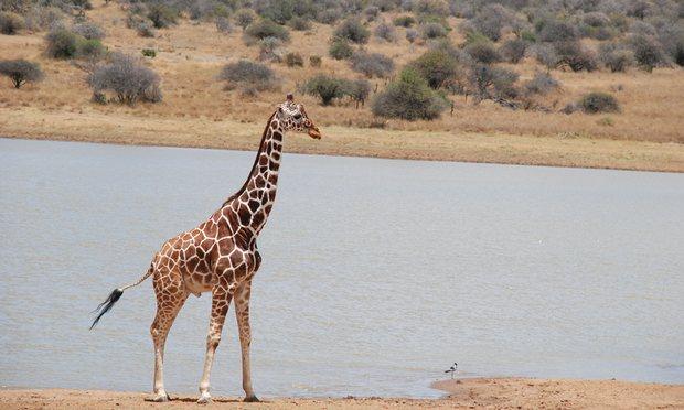 Six reasons why Kenyans should save the Nairobi National Park