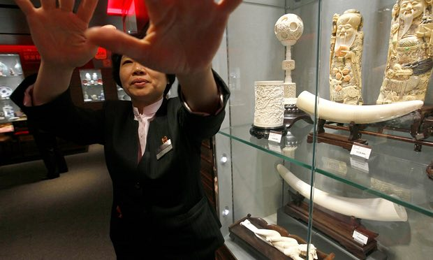 China's ivory trade ban: how to make it work