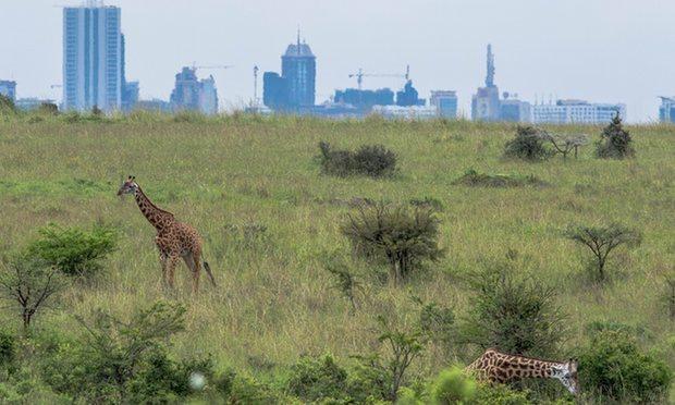 WildlifeDirect Expresses Dismay at Decision to Route SGR Through Nairobi National Park
