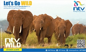 Finally, Kenyans can watch their own country's wildlife on TV