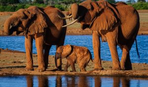 Elephants at a water hole in Tsavo National Park