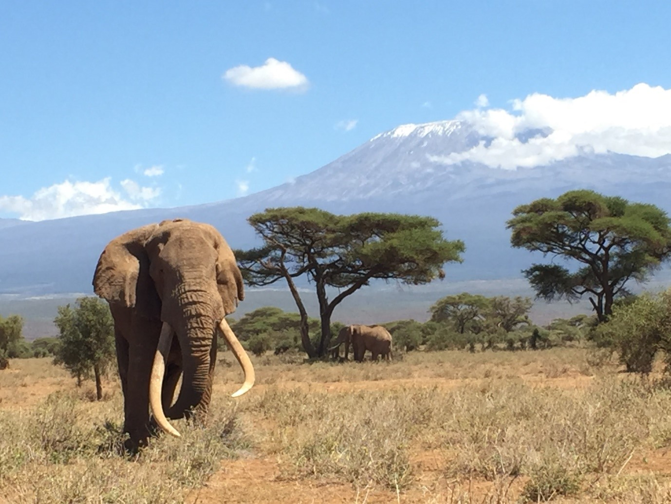 End of an era for a super tusker in Amboseli