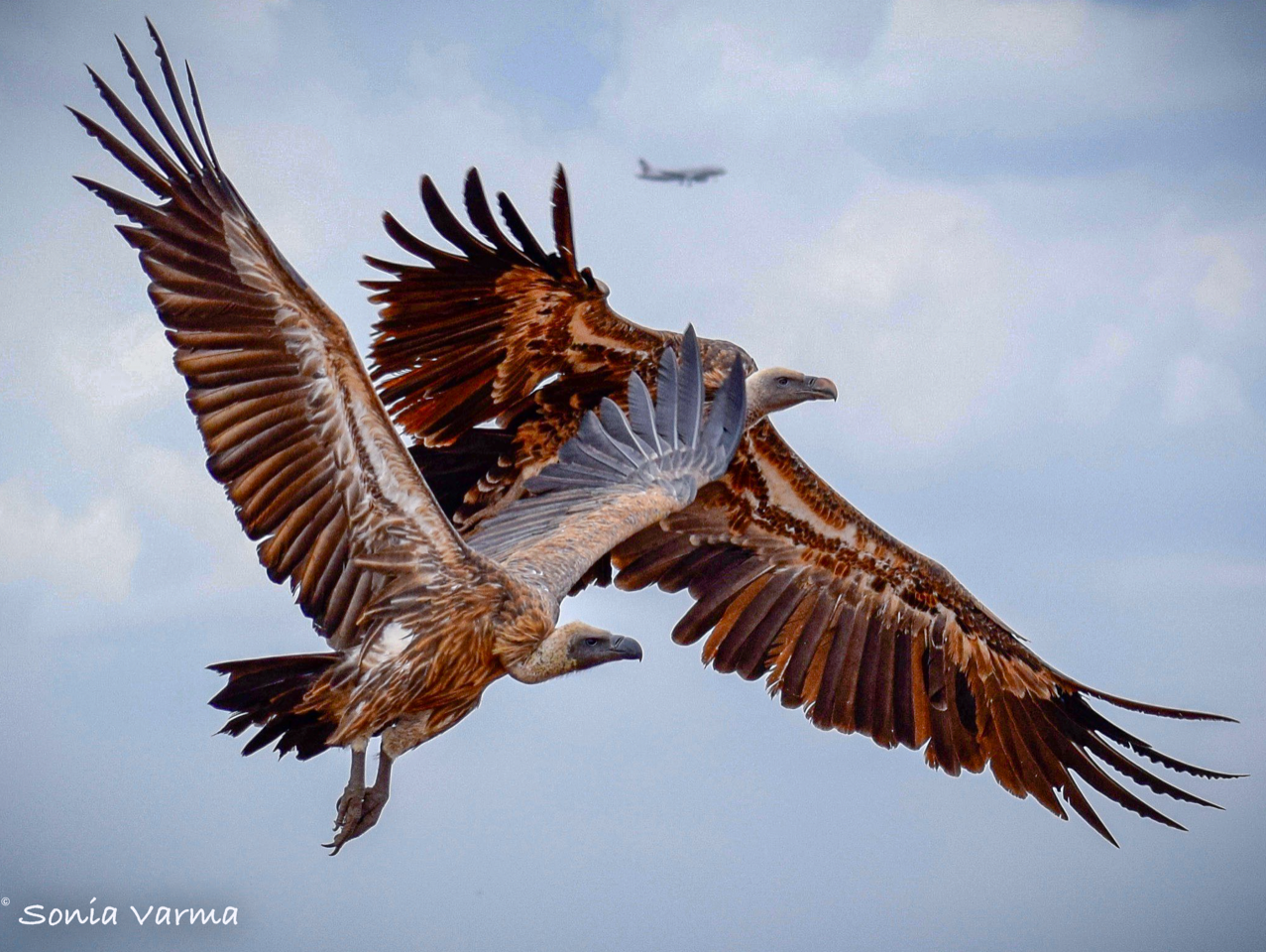 In the Sky – Nature's Treasures Photo Competition