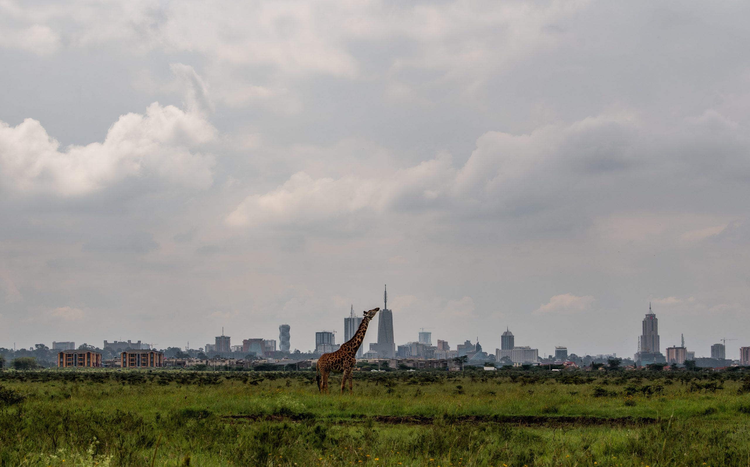 Justice For Nairobi National Park
