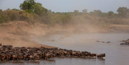 Wildlife Tracks August