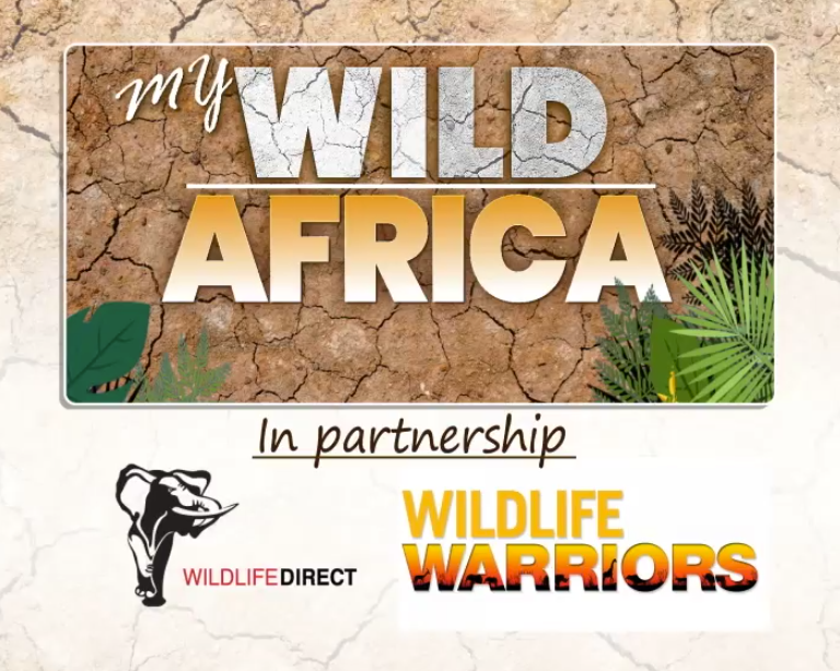 My Wild Africa premiers on Citizen TV Kenya