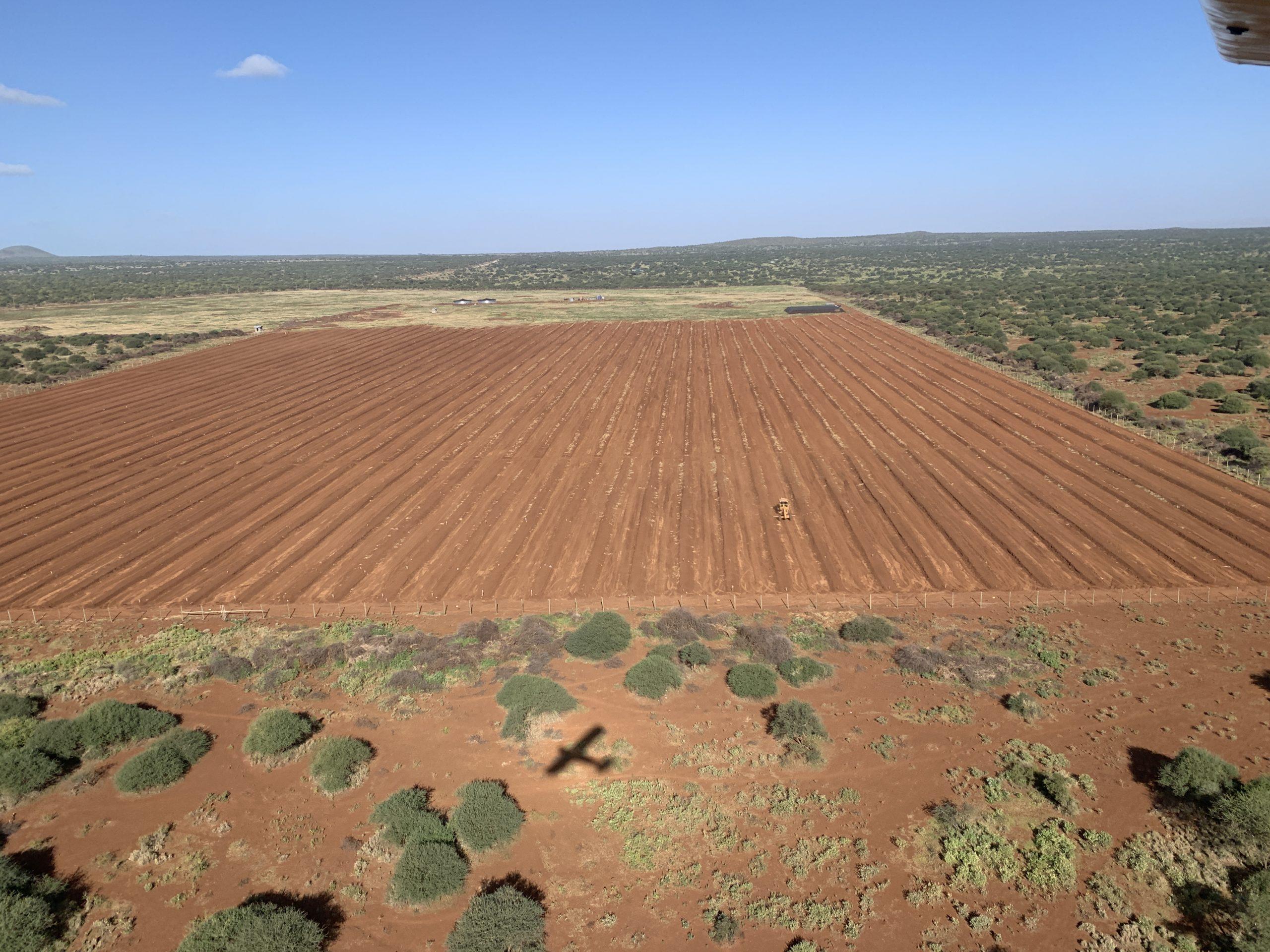 NEMA Revokes the Environmental Impact Assessment license for KiliAvo Farm