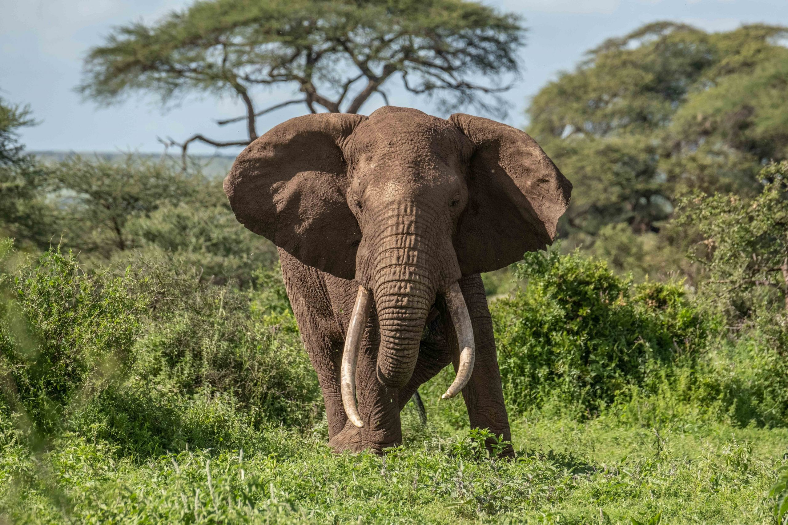 BREAKTHROUGH For Amboseli Elephants