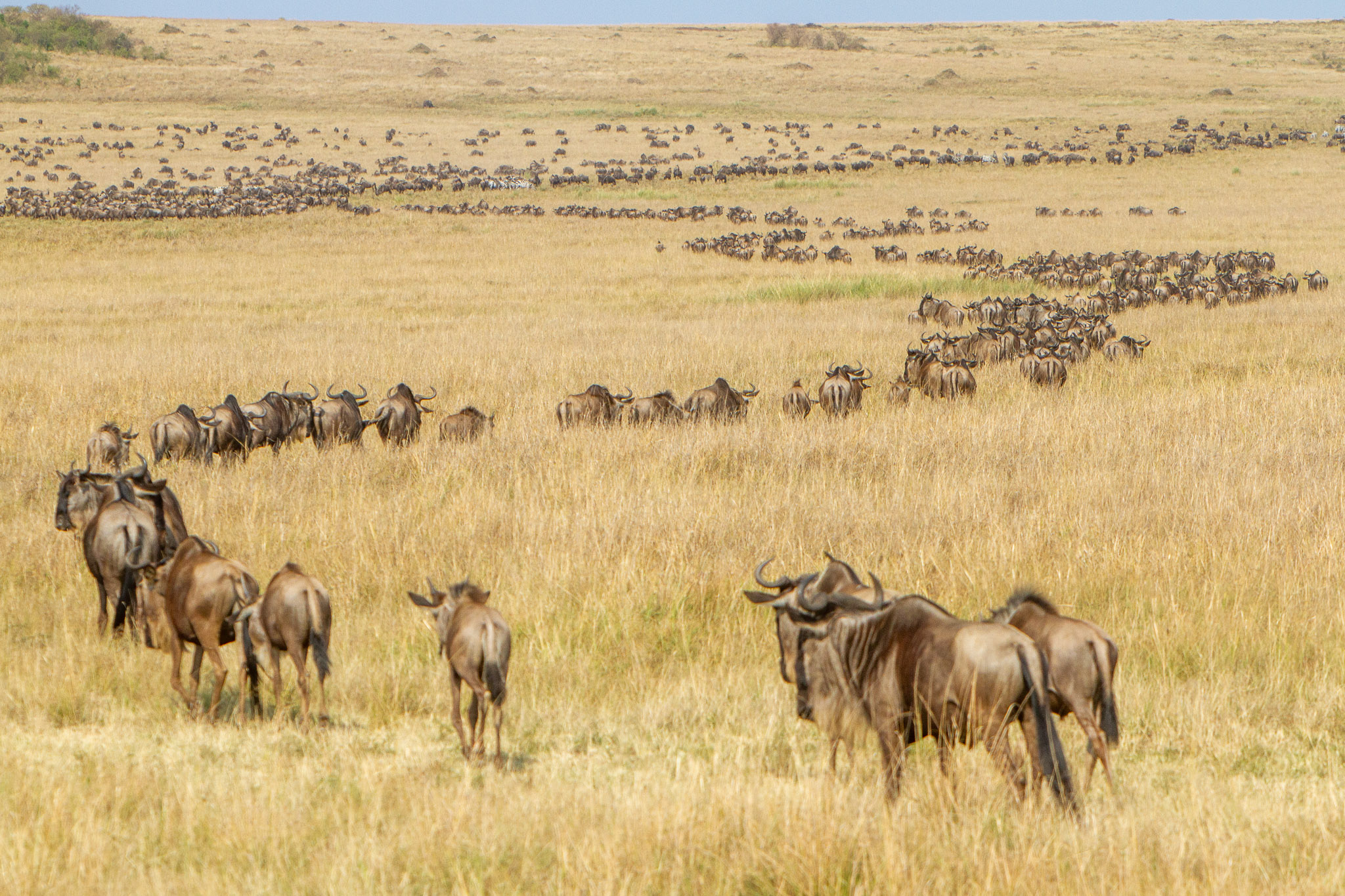 Securing migratory corridors and biodiversity for climate stability