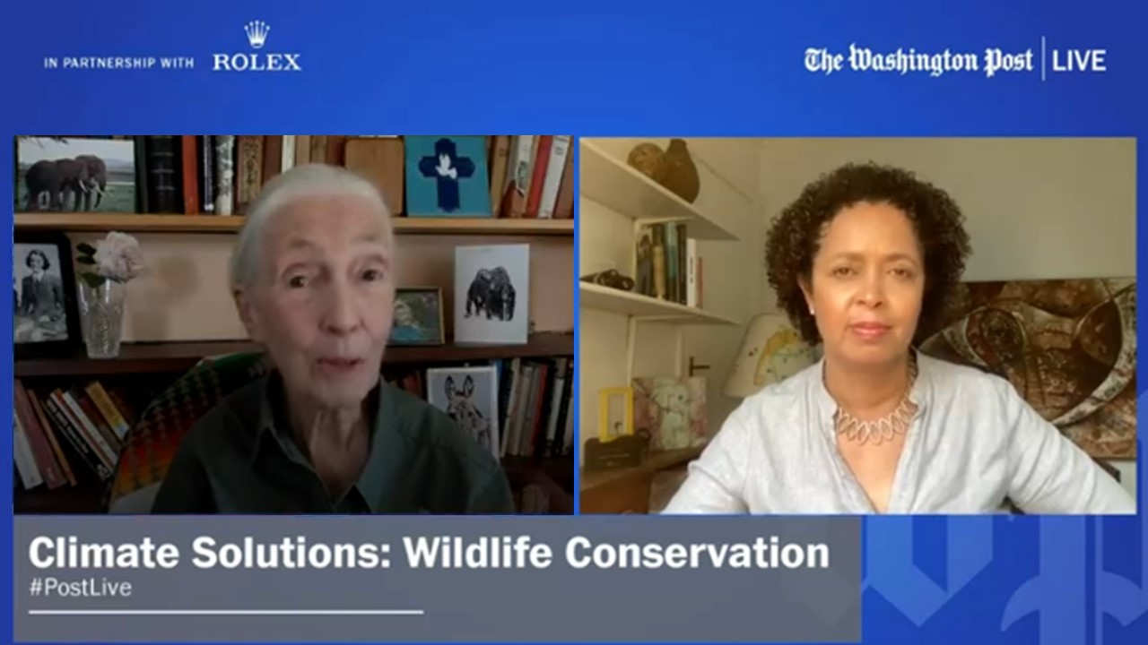 Climate Solutions: Wildlife Conservation